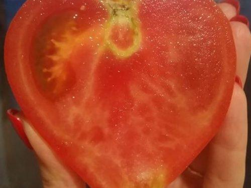 Про томатну любов