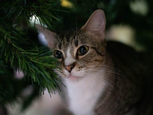 #тридцять_три_історії_про_любов Історія друга Доля кота