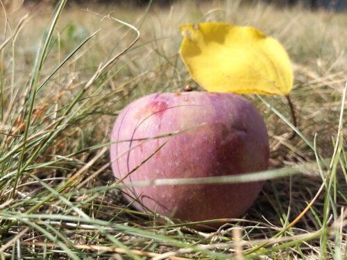 В осені так багато ніжності